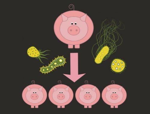 母猪肠道健康,仔猪腹泻,普维动物保健品有限公司, 动物饲料添加剂, 植物提取物, 植物生物素, 精油, PFA, 植物性饲料添加剂, 植物学, 植物性饲料添加剂, 新型促生长剂, 植物素, 替代抗生素促生长剂, 天然产品, 肠道健康, PlusVet Animal Health,植物提取物替代抗生素,替抗,替抗饲料