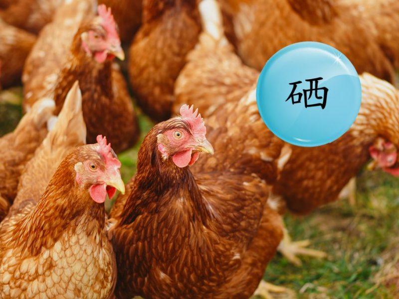 普维动物保健品有限公司, 动物饲料添加剂, 植物提取物, 植物生物素, 精油, PFA, 植物性饲料添加剂, 植物学, 植物性饲料添加剂, 新型促生长剂, 植物素, 替代抗生素促生长剂, 天然产品, 肠道健康, PlusVet Animal Health,养鸡,普维生,普乐壮,饲料添加剂,无抗养殖,植物提取物替代抗生素,芬乐多