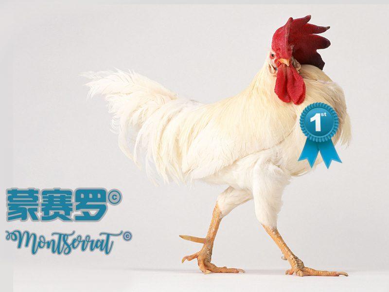 植物素由于其天然的抗菌和免疫刺激特性,以及优化肠道形态和平衡肠道菌群的能力,在过去20年中受到了广泛关注。由于这些特性,植物素能有效优化饲料效果和替代家禽抗生素促生长剂。