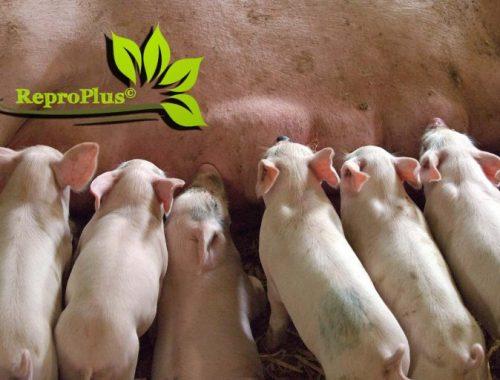 普维动物保健品有限公司, 动物饲料添加剂, 植物提取物, 植物生物素, 精油, PFA, 植物性饲料添加剂, 植物学, 植物性饲料添加剂, 新型促生长剂, 植物素, 替代抗生素促生长剂, 天然产品, 肠道健康, PlusVet Animal Health,养鸡,普维生,普乐壮,饲料添加剂,无抗养殖,植物提取物替代抗生素,母猪,普育多