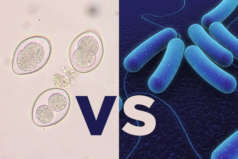 coccidiosis-necrotic-enteritis-differential-diagnosis/
