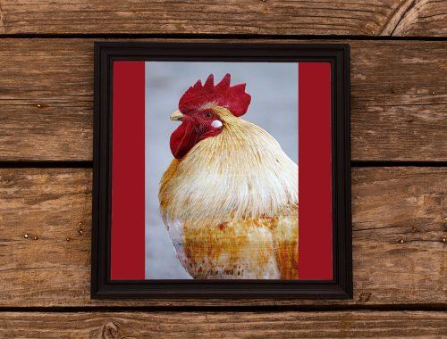 使用天然抗氧化剂预防木质化鸡胸肉