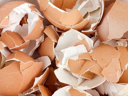 蛋鸡开产初期,同时面临着众多应激(换料、新陈代谢压力、转群等),而且营养需求增加:蛋鸡保持自身生长的同时,必须分配大量的营养物质用于产蛋。我们需要确保消化道健康,从而保证营养吸收,预防消化问题。