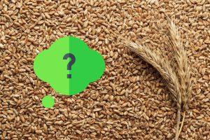 随着玉米价格飙升,有必要考虑其他可以替代的谷物。黑麦、小麦、大麦、小黑麦和燕麦是玉米的可行替代品;然而玉米是易于消化的,而这些替代品中含有干扰营养消化和吸收的抗营养因子。这些抗营养因子中包含非淀粉多糖(NSP)。