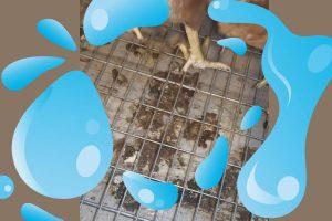 梭菌, 坏死性肠炎, 蛋鸡, 产蛋鸡, 种鸡, 家禽, 普维动物保健品有限公司, 动物饲料添加剂, 植物提取物, 植物生物素, 精油, PFA, 植物性饲料添加剂, 植物学, 植物性饲料添加剂, 新型促生长剂, 植物素, 替代抗生素促生长剂, 天然产品, 肠道健康, PlusVet Animal Health,